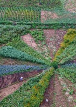 豫西老农种出两亩鲜花拼盘