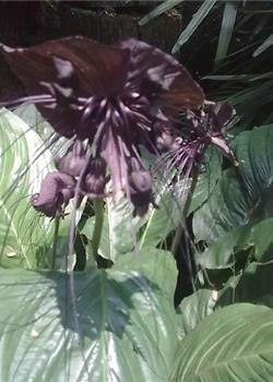 世界上的10种奇花异草