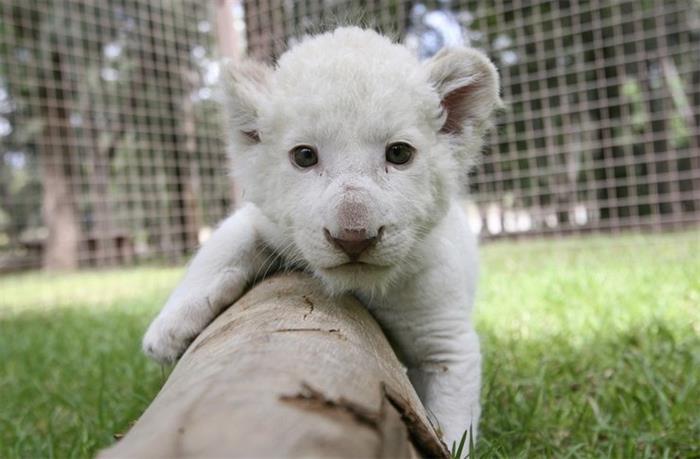 最萌动物婴儿照