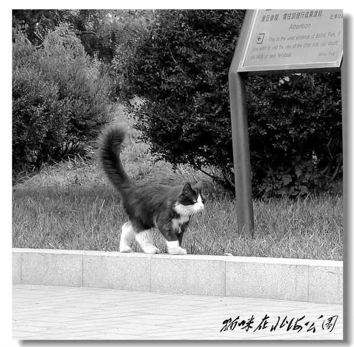 摄影图片 北海公园可爱的咪咪
