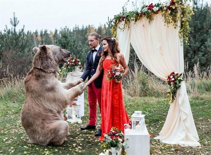 战斗民族的婚礼!请来267斤灰熊做证婚人