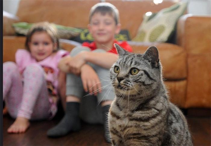 英国小猫走失11天 顽强存活重归主人怀抱