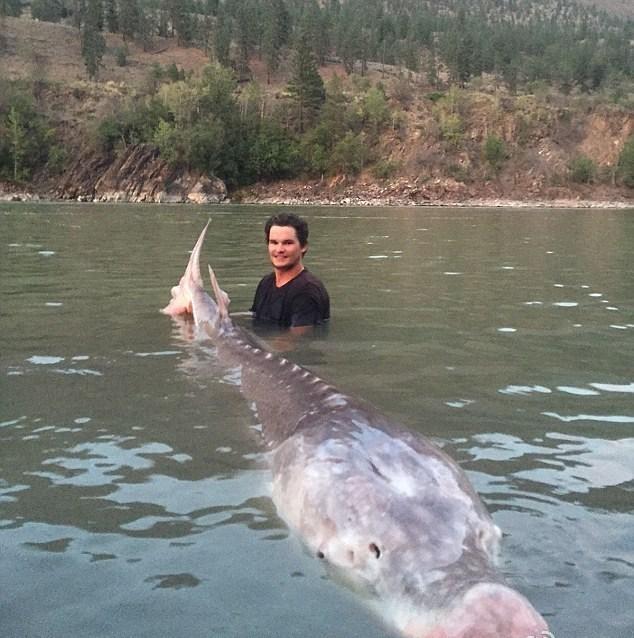 """加拿大男孩捕获80岁580斤重""""猪鼻""""鲟鱼"""