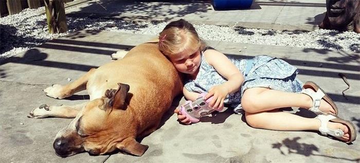 泪目!小女孩与爱犬遗体最后道别