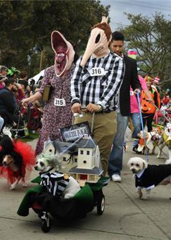 狗狗也过万圣节 萌犬变装搞怪