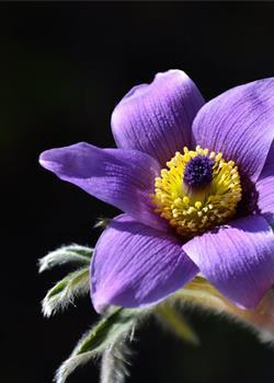 摄影图片 各色野花灿烂的开在山坡上