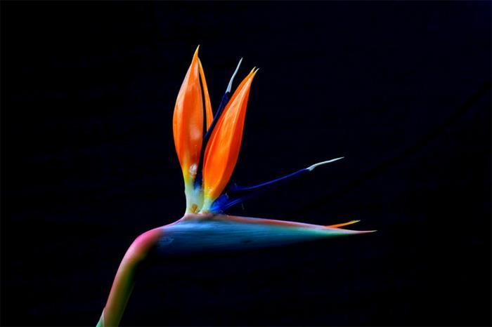 摄影图片花卉习作含苞欲放花枝招展