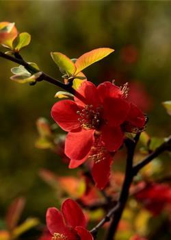 摄影图片 桃红柳绿,乱花渐坠迷人眼
