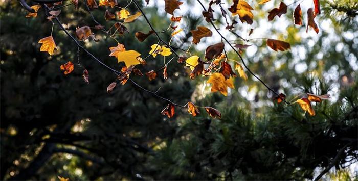 摄影图片 优美的海淀公园随拍 秋