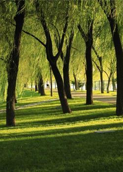 摄影图片 景色优美的颐和园照片.请各位指导.