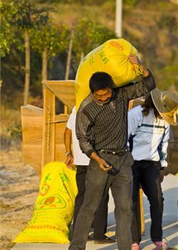 摄影图片 稻谷飘香丰收的忙碌