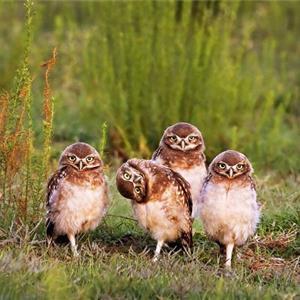 当这些野生动物都来搞笑的时候