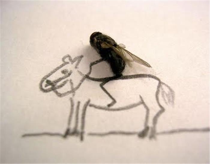 恶搞苍蝇图片集,小苍蝇大世界