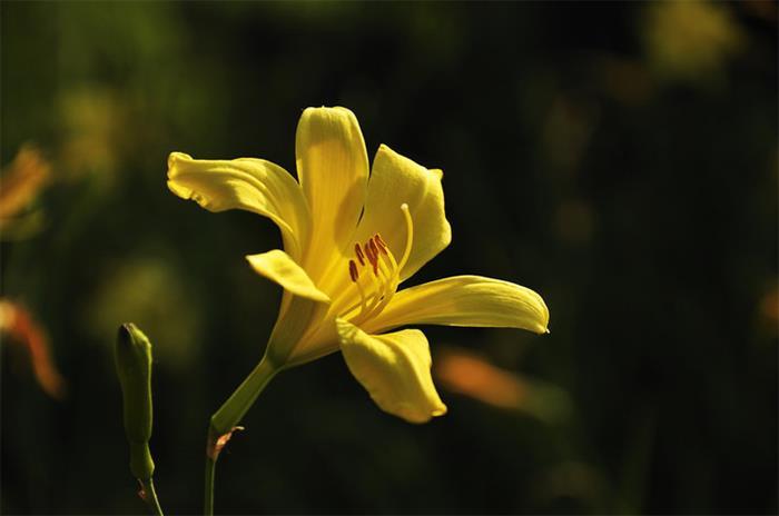 摄影图片幸福的花儿向谁开