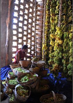 摄影图片 富饶美丽的新疆纪实